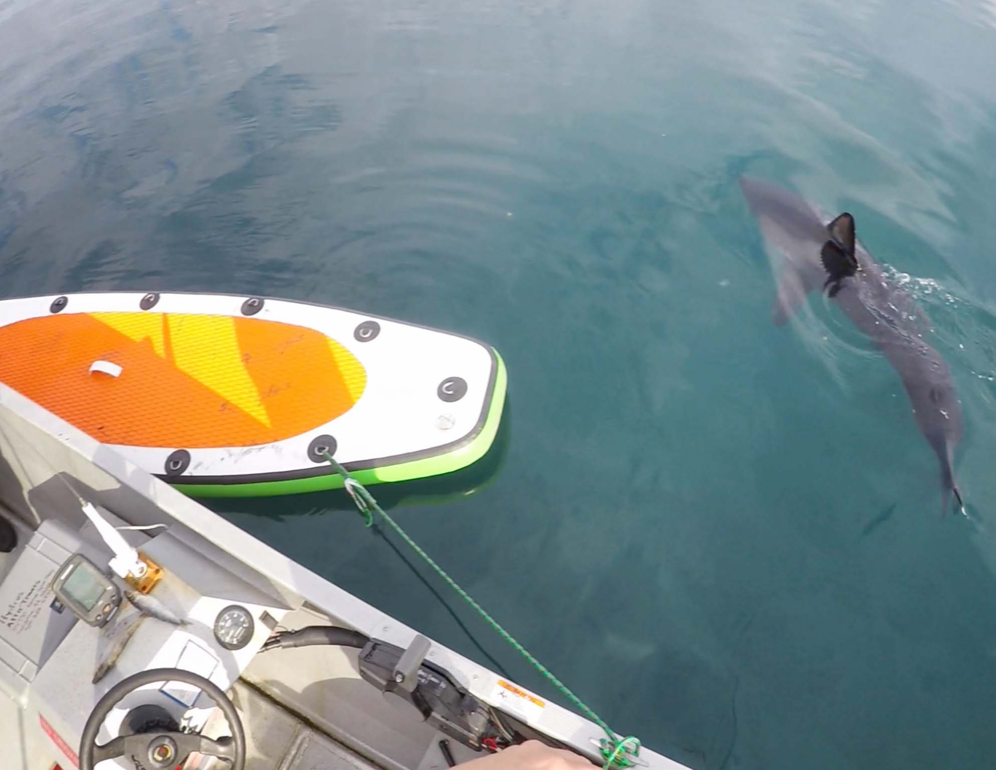 shark and paddleboard
